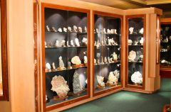 The Deccan Plateau Gallery is a well designed walk through Gallery with over 1000 Mineral & Zeolite Specimens